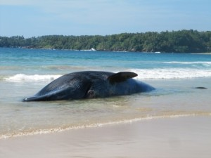 beaching the whale