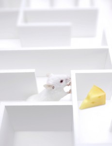 lab rats in a maze